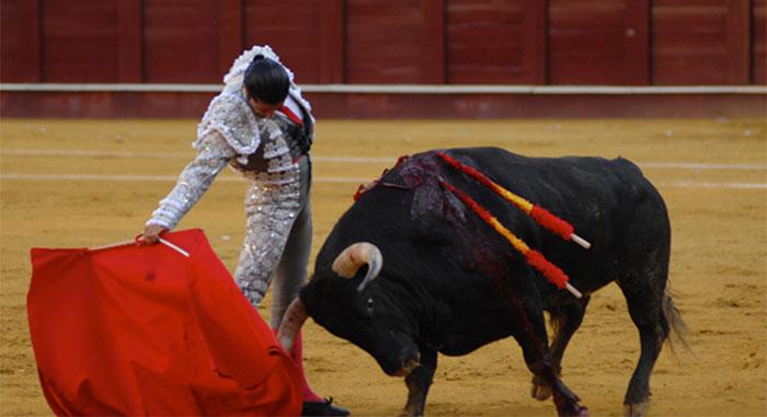 toro-rojo345
