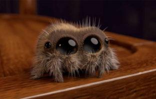 VÍDEO: Conoce a Lucas, la araña que ha enamorado a todo Internet
