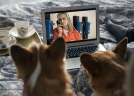 Las mascotas son la mejor compañía para ver series, según Netflix