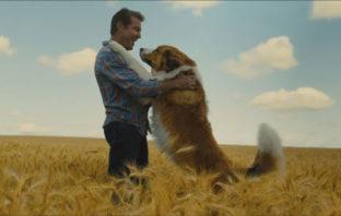 'A Dog's Journey' estrenó su primer y muy emotivo adelanto