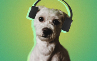 Pet Playlists: la nueva función de Spotify para acompañar a tus mascotas